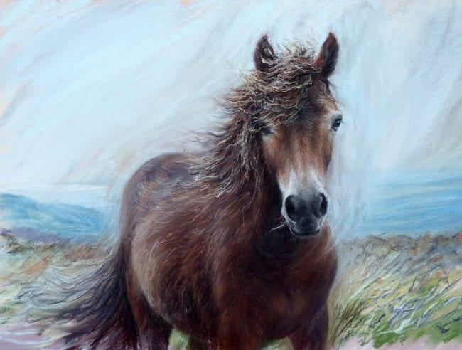 Windswept on Exmoor